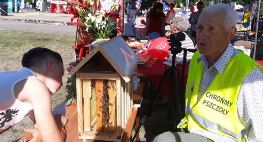 Ekologia, Przyjaciel pszczół Duckiej - zdjęcie, fotografia