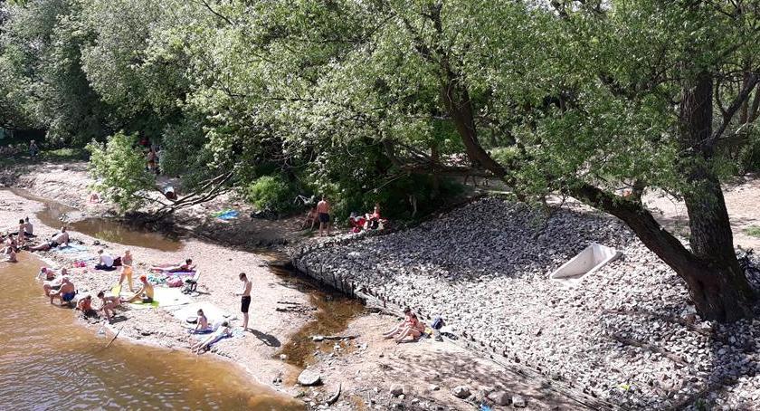 Eko System , Otwockie Sosny jeszcze walczą rurą zrzutową józefowskiej oczyszczalni - zdjęcie, fotografia