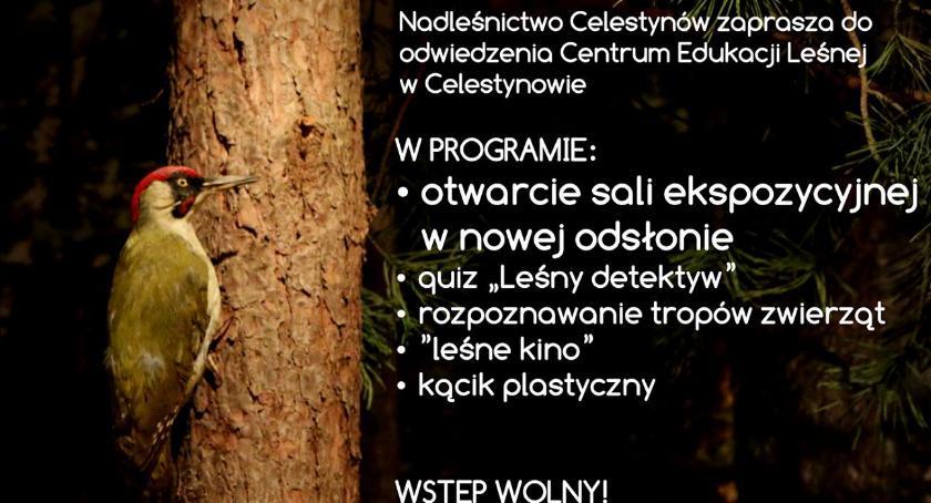Edukacja - nauka, Leśny detektyw Celestynów - zdjęcie, fotografia