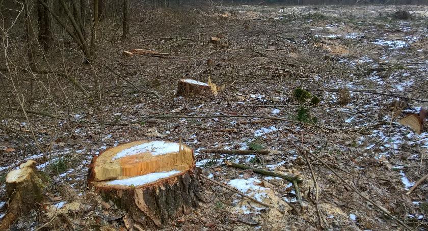Eko System , Mieszkańcy Rudki walczą nielegalną wycinką drzew dewastacją środowiska - zdjęcie, fotografia