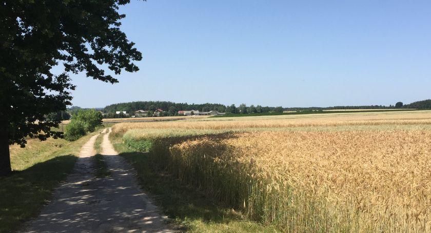 Rolnictwo, Susza rolnicza wszystkich uprawach - zdjęcie, fotografia