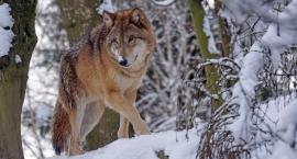 Dzień otwarty w CEL: Co zwierzęta robią zimą?