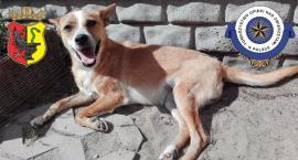 Bezpłatne sterylizacje i kastracje przygarniętych psów