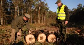 Ruszyła wycinka lasu w Dąbrówce