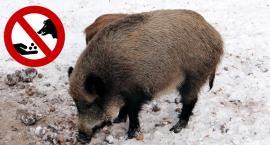 Zakaz dokarmiania dzików na terenie powiatu otwockiego
