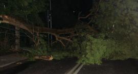Zwalone drzewo na ul. Narutowicza w Otwocku