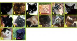 Głosowanie w konkursie Otwocki prima-pies i prima-kot