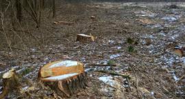 Mieszkańcy Rudki walczą z nielegalną wycinką drzew i dewastacją środowiska