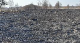 Głupia, wiosenna tradycja, czyli znów się zaczęło wypalanie traw