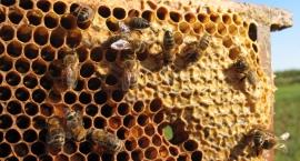 Rolniku, sadowniku, działkowcu pamiętaj o pszczołach
