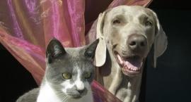 W Celestynowie dopłacają do zabiegu dla psa lub kota