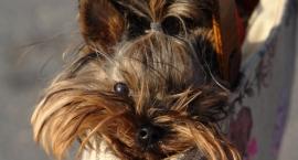 Z psem na zakupach w Ferio Wawer