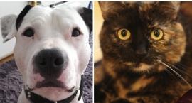 Finał konkursu: Otwocki prima-pies i prima-kot