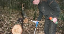 Wytną zarażony las