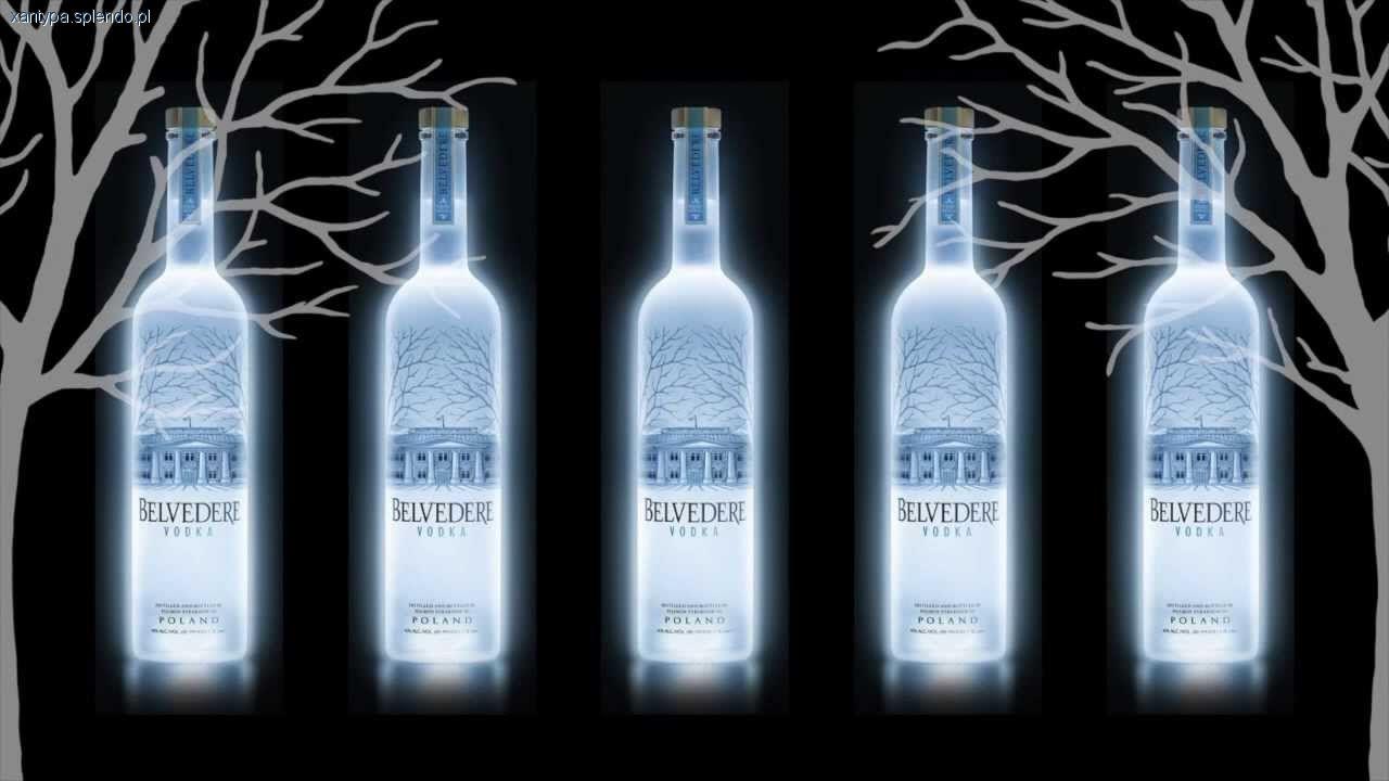 Wódka, Belvedere alkohol który - zdjęcie, fotografia