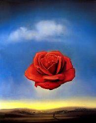 Róża kontemplacyjna