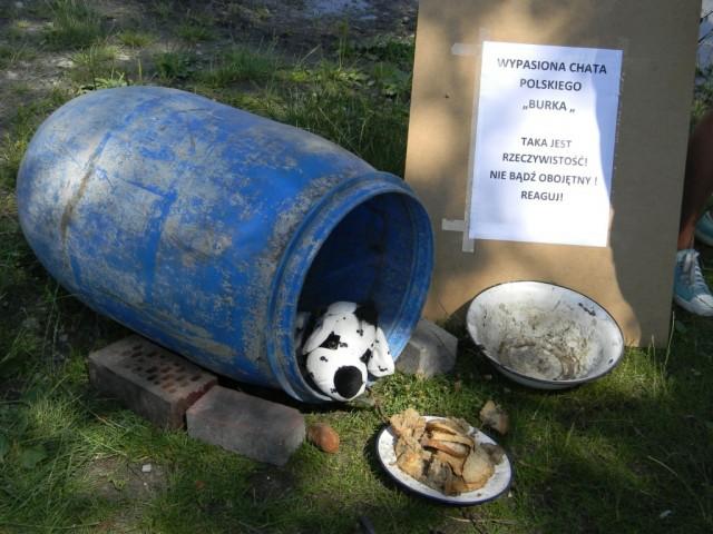 Aktualności, Bardzo dużo szczeniaków czeka adopcji - zdjęcie, fotografia