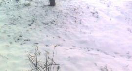 Zima pokazała bezsilność władz