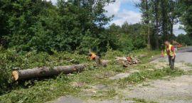 Mieszkańcy Adamowizny przeciwko wycince drzew