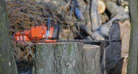 Kary za wycinkę drzew zbyt restrykcyjne