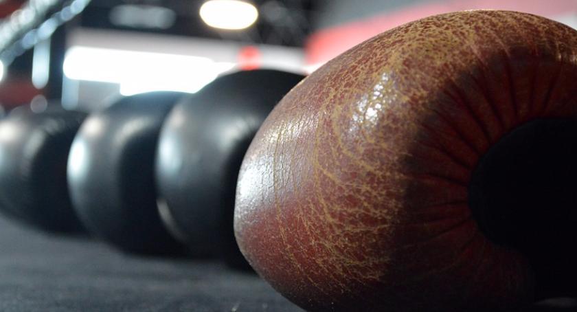 Blogi, Damscy bokserzy! - zdjęcie, fotografia