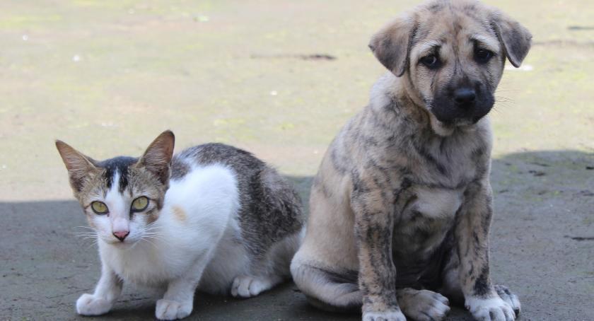 URZĘDY, Miasto dofinansuje sterylizację psów kotów - zdjęcie, fotografia