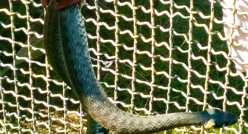 PREWENCJA, Strażacy zabrali węża jednej gminie Bielsk Podlaski - zdjęcie, fotografia