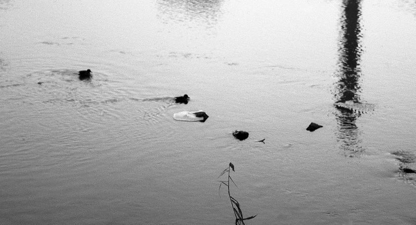 Blogi, Samotność - zdjęcie, fotografia