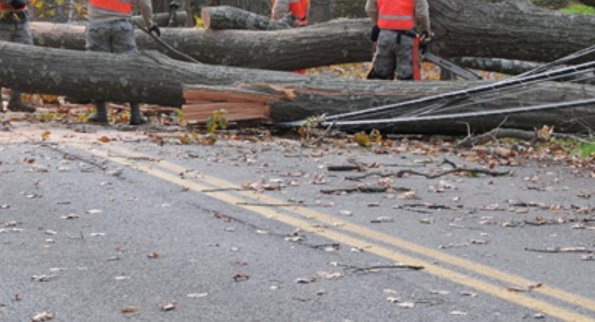 WYPADEK, Powalone drzewa zablokowały drogę Bielsk Podlaski Białystok - zdjęcie, fotografia