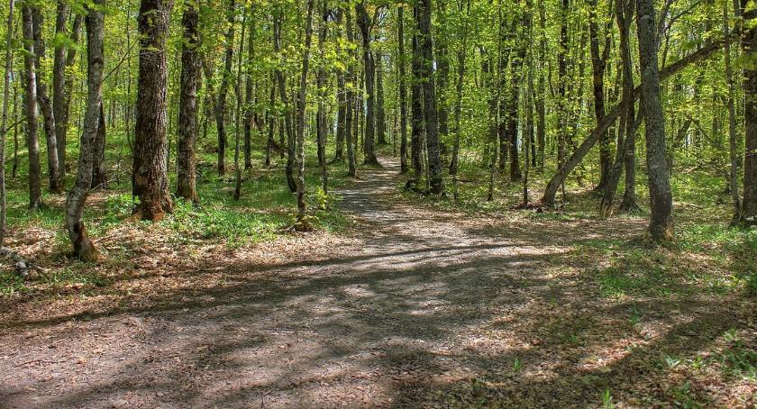 BLOGI, Jesienny spacer lesie - zdjęcie, fotografia