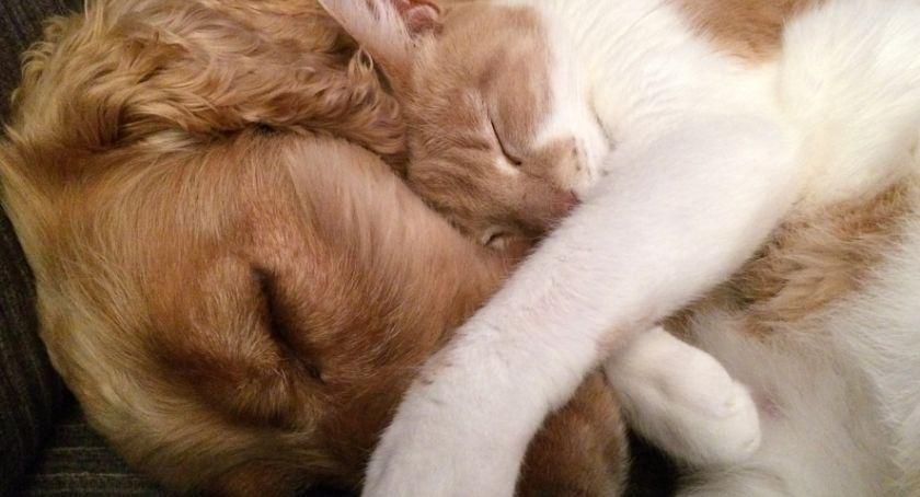 URZĘDY, Gmina dofinansuje zabiegi sterylizacji kastracji zwierząt - zdjęcie, fotografia