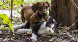 Program opieki nad zwierzętami oraz zapobiegania bezdomności zwierząt w Bielsku Podlaskim