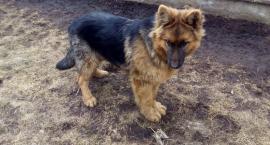 Bielsk Podlaski: Policjant odnalazł właścicieli zbłąkanego psa