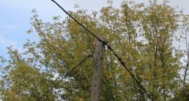 Kożyno Duże: Przerwy w dostawie prądu