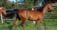 W miejscowości Popławy dwa konie uszkodziły mercedesa