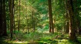 Wojewódzki konkurs plastyczny Wiosna w lesie