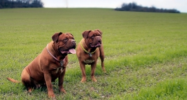 Akcja wyłapywania bezpańskich psów w Bielsku Podlaskim