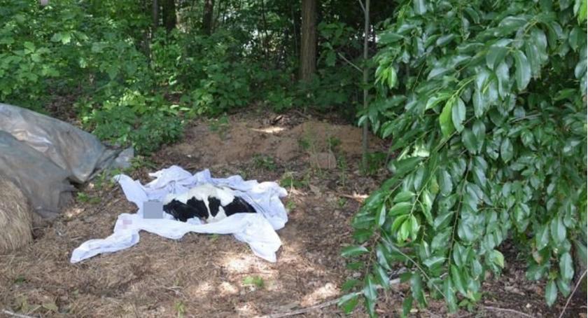 Nasze interwencje, Winnych zabicia bociana - zdjęcie, fotografia