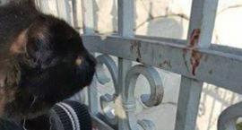 Powiesili kota na ogrodzeniu