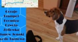 Pomóżmy odnaleźć psa - terapeutę chorego chłopca!