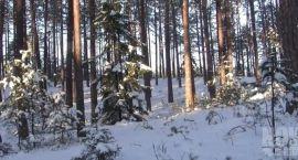 Zima w rezerwacie Szum (VIDEO)