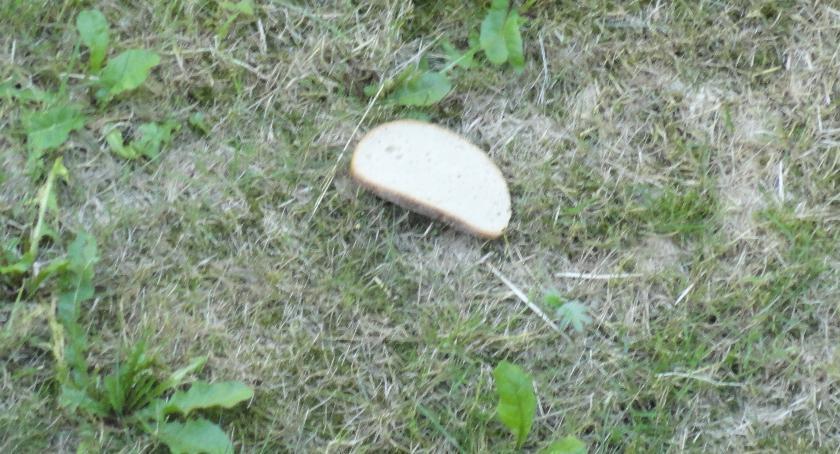 SPOŁECZNE, Chleb ptaków - zdjęcie, fotografia
