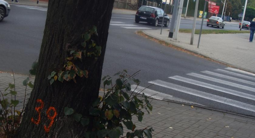 blogi, Drzewo numerem - zdjęcie, fotografia