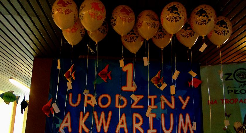 SPOŁECZNE, Akwarium Płocku przewodnikiem - zdjęcie, fotografia