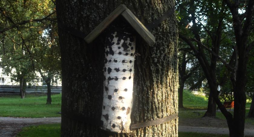 SPOŁECZNE, Podpatrzaone Warszawie domki owadów - zdjęcie, fotografia