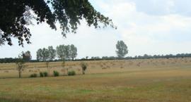 Rolnictwo na Mazowszu