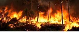 Płoną lasy .. jak ochronić zabudowania przed trawiącym żywiołem?
