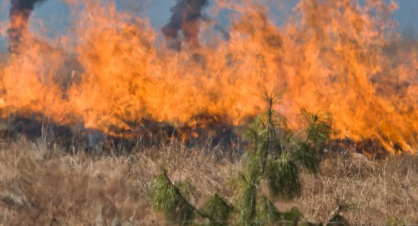 Aktualności, wypalaniu traw! - zdjęcie, fotografia