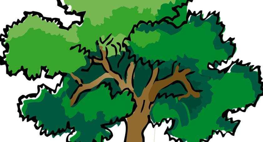 Aktualności, Drzewko odpady - zdjęcie, fotografia