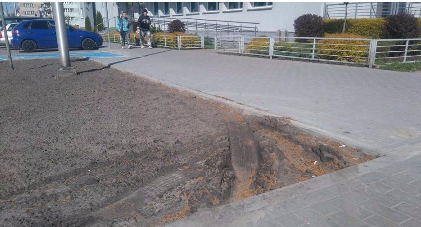 Felietony, Miejska zieleń Kierowcy - zdjęcie, fotografia
